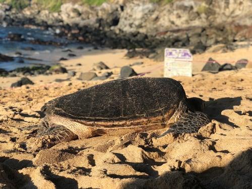 Sea Turtle_Markentum