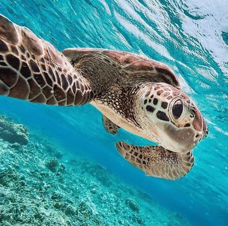 Sea Turtle Conservancy_Markentum